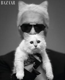Choupette, fashion's most famous Kitty Kat.